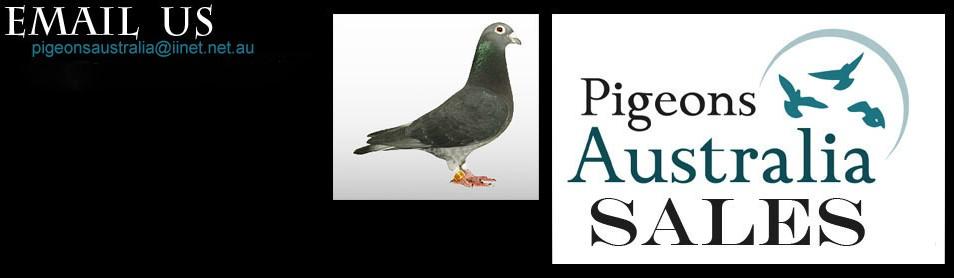 Pigeons Australia